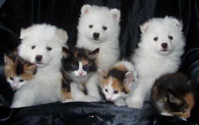 Puppiesavailable